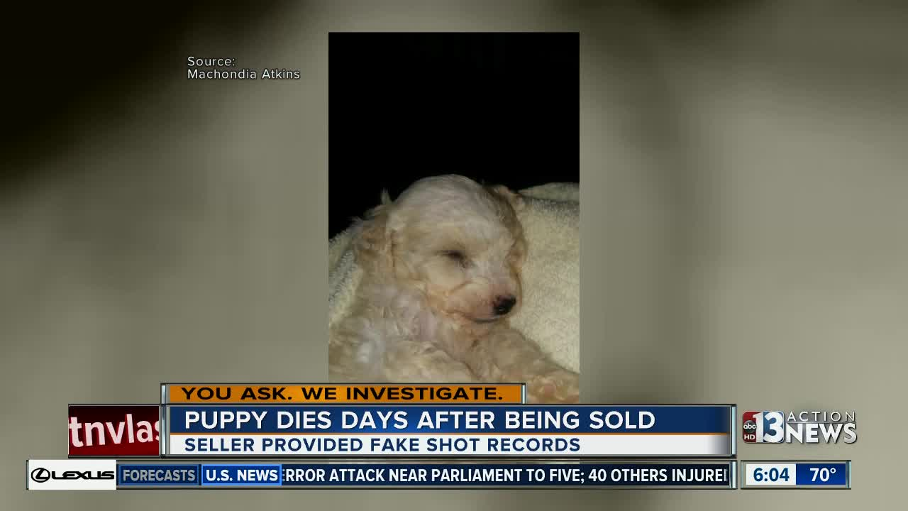 Update Breeder Donates Puppy To Family Whose Dog Died